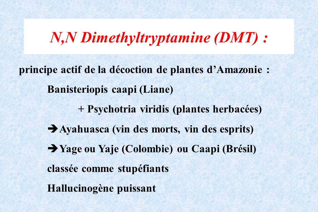 N,N Dimethyltryptamine (DMT) : principe actif de la décoction de plantes dAmazonie : Banisteriopis caapi (Liane) + Psychotria viridis (plantes herbacé