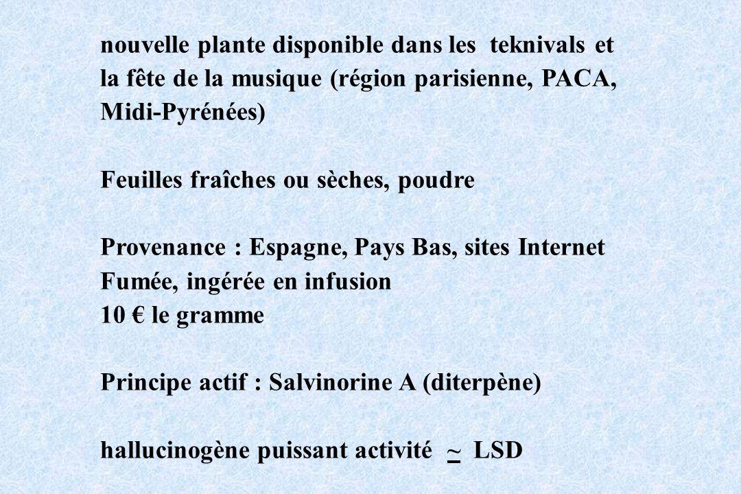 nouvelle plante disponible dans les teknivals et la fête de la musique (région parisienne, PACA, Midi-Pyrénées) Feuilles fraîches ou sèches, poudre Pr