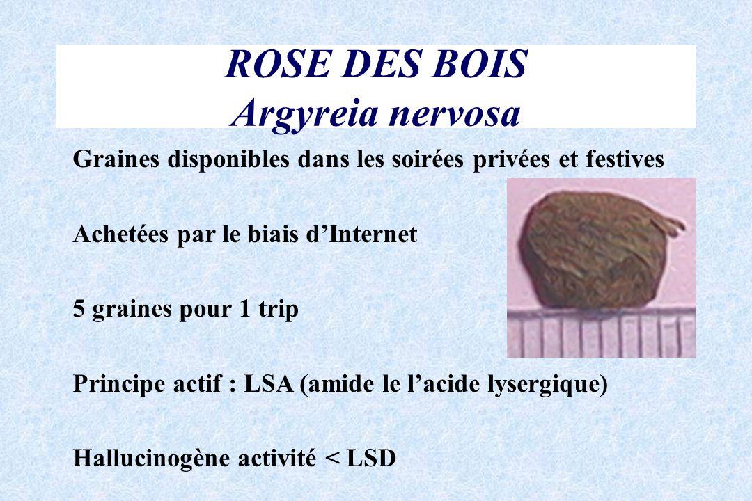 ROSE DES BOIS Argyreia nervosa Graines disponibles dans les soirées privées et festives Achetées par le biais dInternet 5 graines pour 1 trip Principe