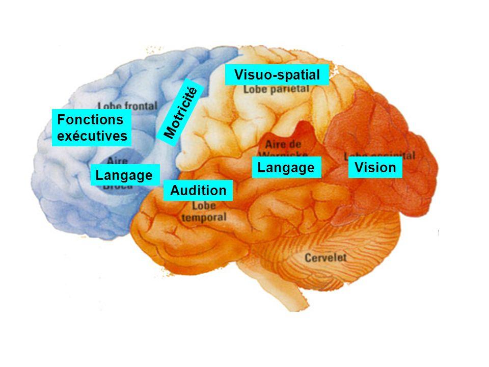 Vision Audition Visuo-spatial Langage Fonctions exécutives Langage Motricité