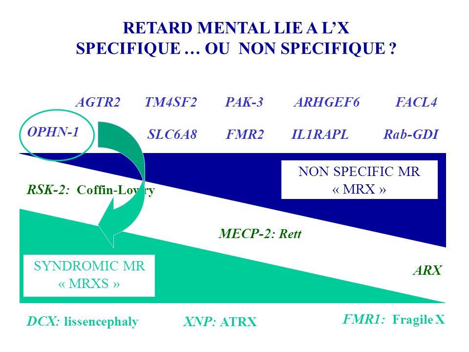 FMR1 : Fragile X Rab-GDI RSK-2 : Coffin-Lowry DCX : lissencephaly RETARD MENTAL LIE A LX SPECIFIQUE … OU NON SPECIFIQUE ? SYNDROMIC MR « MRXS » NON SP