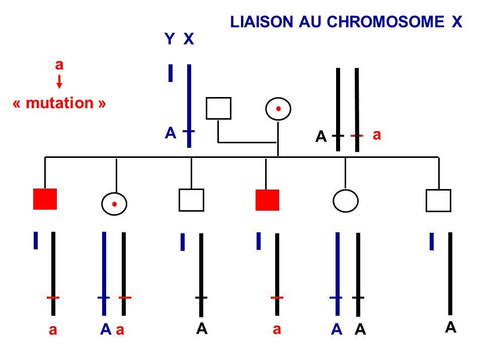 LIAISON AU CHROMOSOME X a « mutation » A A A aA a A A a a a Y X A