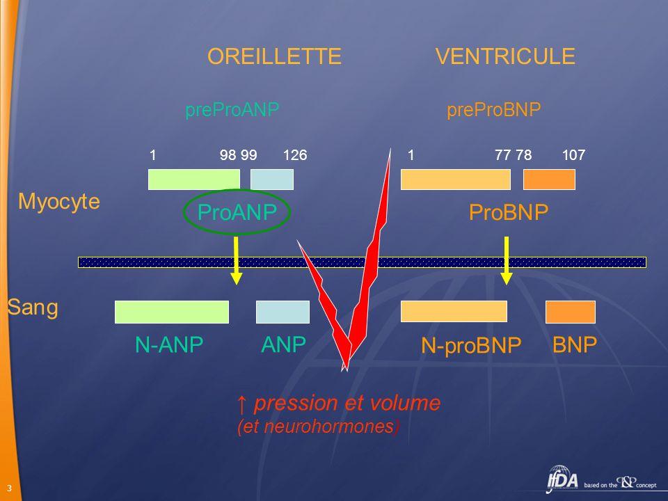 3 1 98 99 126 1 77 78 107 ProANPProBNP N-ANP N-proBNP ANP BNP OREILLETTE VENTRICULE Myocyte Sang preProANPpreProBNP pression et volume (et neurohormon