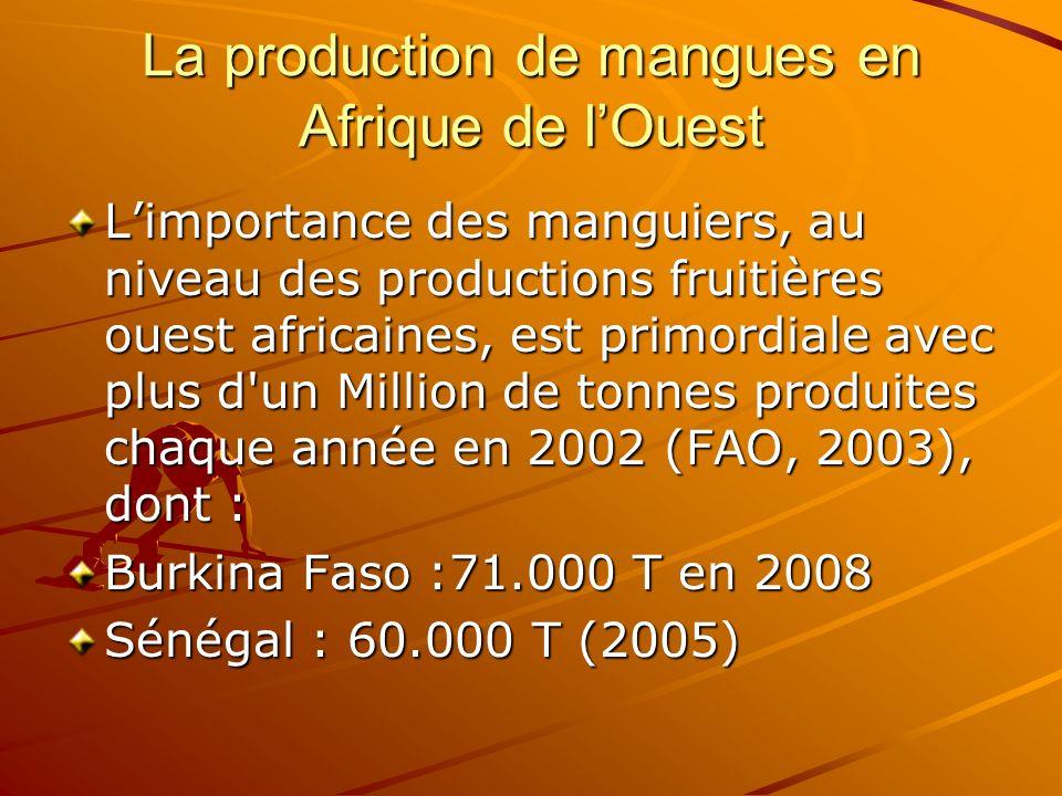La production de mangues en Afrique de lOuest Limportance des manguiers, au niveau des productions fruitières ouest africaines, est primordiale avec p