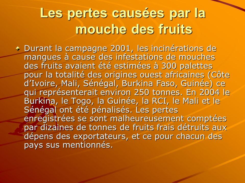 Les pertes causées par la mouche des fruits Durant la campagne 2001, les incinérations de mangues à cause des infestations de mouches des fruits avaie