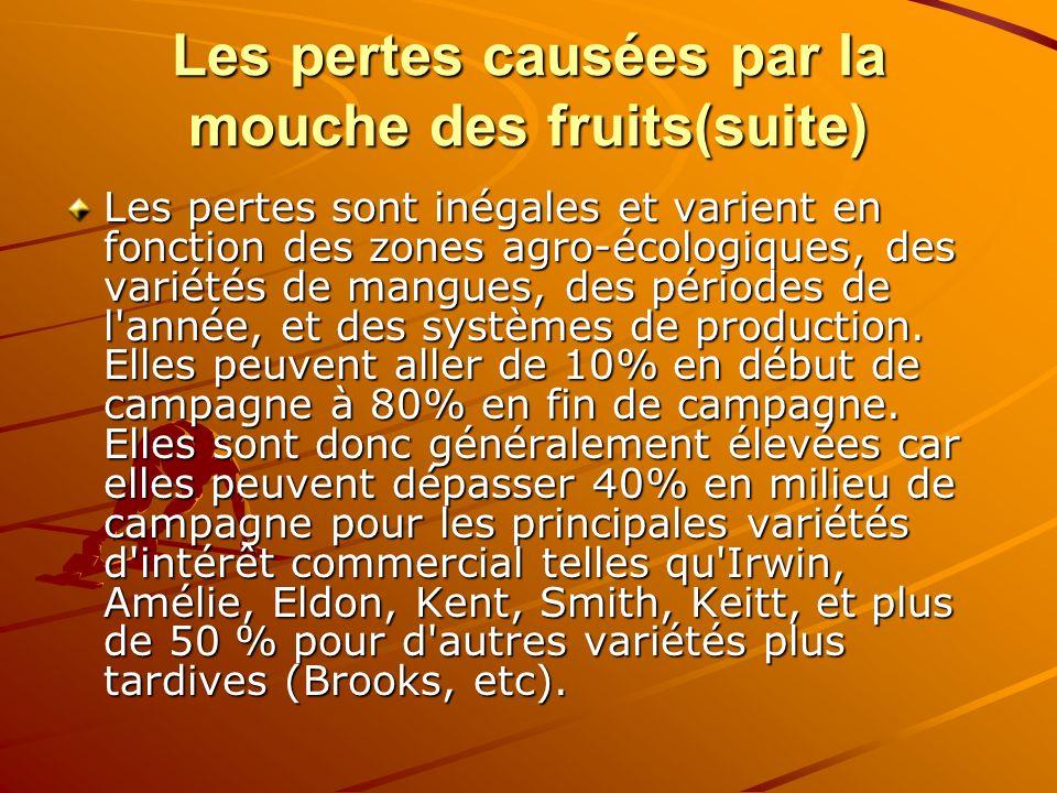 Les pertes causées par la mouche des fruits(suite) Les pertes sont inégales et varient en fonction des zones agro-écologiques, des variétés de mangues