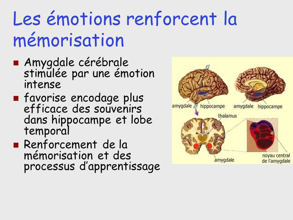 Les émotions renforcent la mémorisation Amygdale cérébrale stimulée par une émotion intense favorise encodage plus efficace des souvenirs dans hippoca