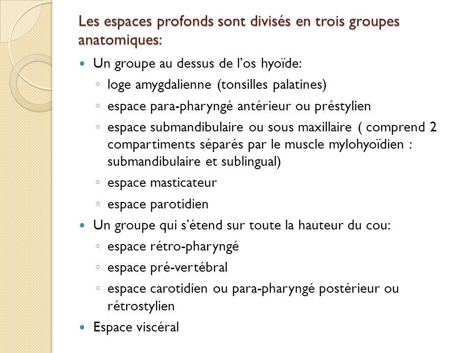 Les espaces profonds sont divisés en trois groupes anatomiques: Un groupe au dessus de los hyoïde: loge amygdalienne (tonsilles palatines) espace para
