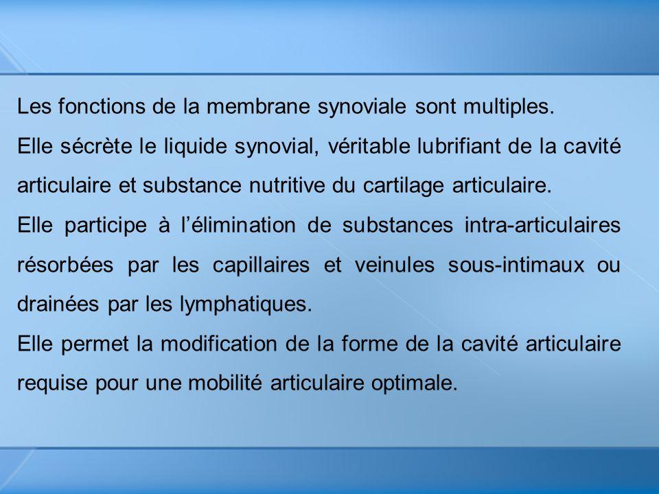 Les fonctions de la membrane synoviale sont multiples. Elle sécrète le liquide synovial, véritable lubrifiant de la cavité articulaire et substance nu