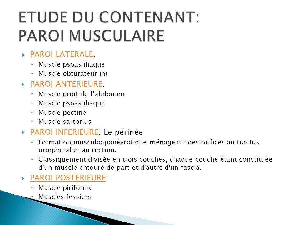 1 1 2 1: muscle obturateur interne 2: chef iliaque du muscle psoas iliaque 3 3: chef psoas du muscle psoas iliaque