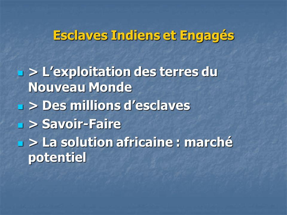 Esclaves Indiens et Engagés > Lexploitation des terres du Nouveau Monde > Lexploitation des terres du Nouveau Monde > Des millions desclaves > Des mil