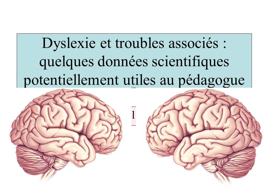 Dyslexie et troubles associés : quelques données scientifiques potentiellement utiles au pédagogue Michel Habib