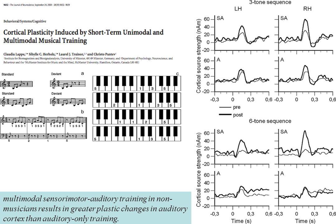 Enregistrement MEG avant et après 2semaines dentraînement chez deux groupes de non- musiciens :SA sensori-moteur + auditif (clavier) & A auditif seul.