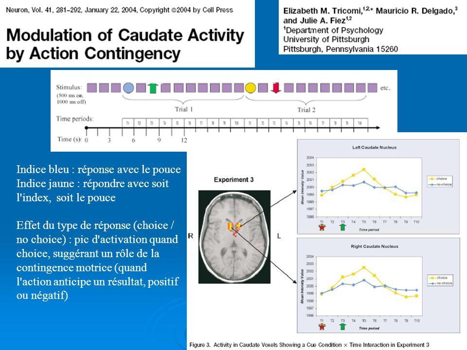 Conclusion (2) Les travaux en imagerie fonctionnelle convergent pour montrer le rôle prééminent du noyau accumbens dans l'anticipation d'une récompens