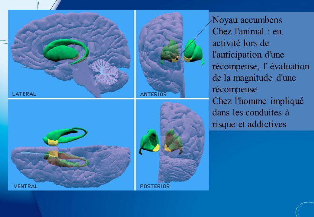 Dopamine D 2/D3 receptor availabilityDopamine transporter availability