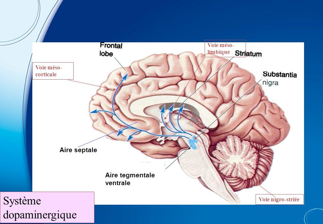 Dysfonction exécutiveTrouble de l'action TDAH : trois domaines de la dysfonction Syndrome TDAH : pathologie de l'action --> 3 niveaux de perturbations