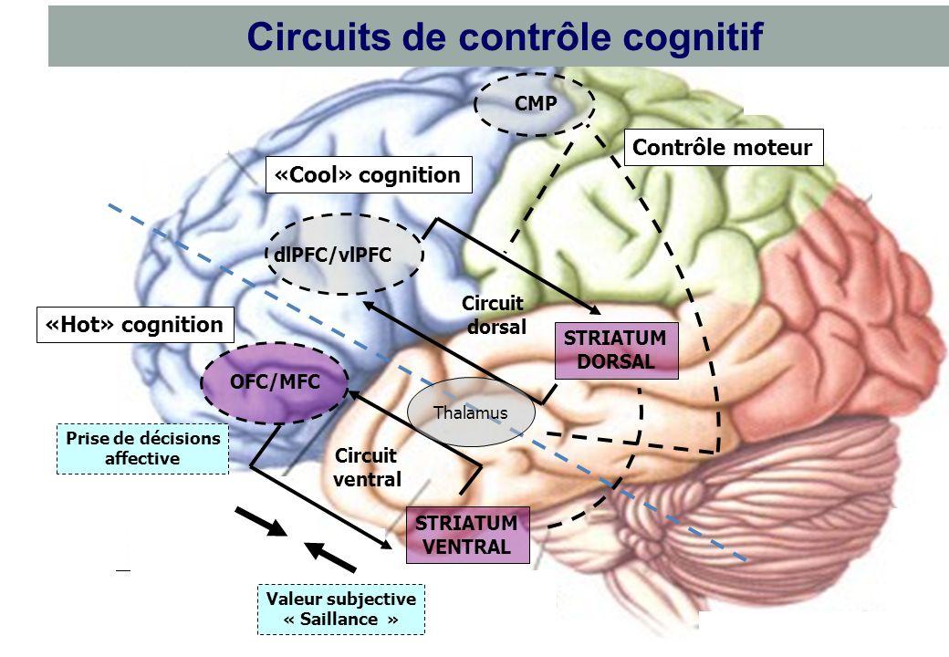 Déficits neuropsychologiques multiples MesocorticalMesolimbic Nigrostriatal Dysfonctionnement des branches dopaminergiques TDAH Dyséxécutif Déficit at