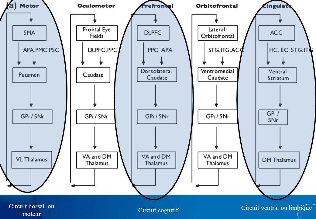 Circuit ventral dlPFC/vlPFC STRIATUM VENTRAL OFC/MFC Circuit dorsal «Cool» cognition «Hot» cognition Valeur subjective « Saillance » Prise de décision