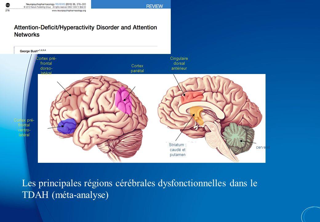 Striatum : caudé et putamen Cingulaire dorsal antérieur Cortex pré- frontal dorso- latéral Cortex pré- frontal ventro- latéral Cortex pariétal cervelet Les principales régions cérébrales dysfonctionnelles dans le TDAH (méta-analyse)