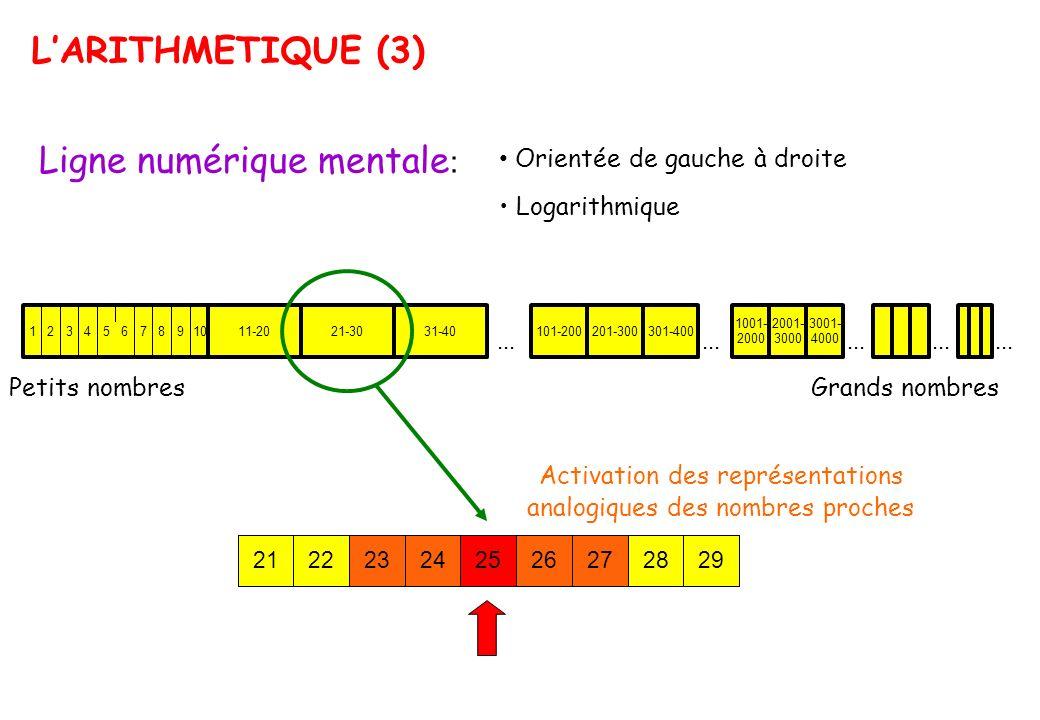 LARITHMETIQUE (3) Ligne numérique mentale : Orientée de gauche à droite Logarithmique Petits nombresGrands nombres Activation des représentations anal