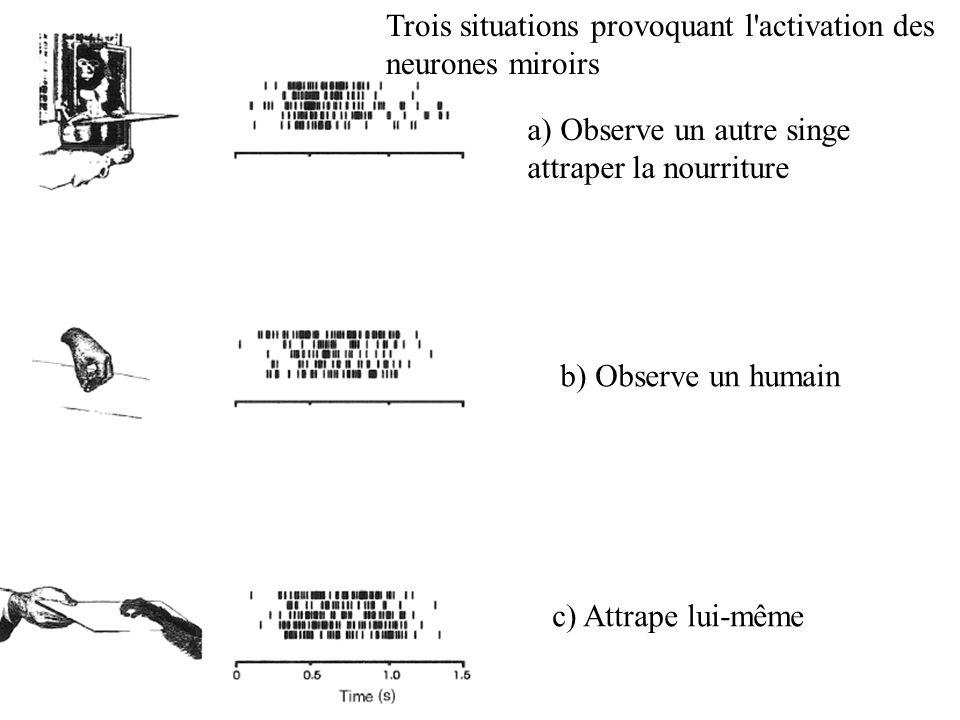 Trois situations provoquant l'activation des neurones miroirs a) Observe un autre singe attraper la nourriture b) Observe un humain c) Attrape lui-mêm