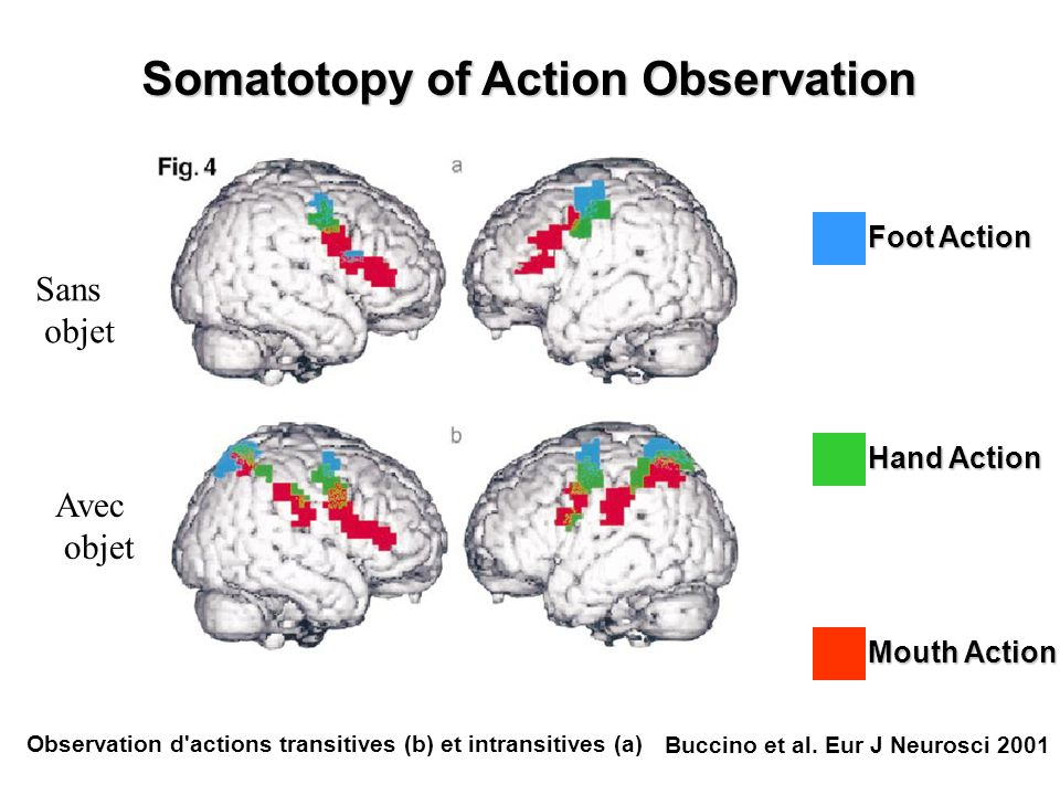 Somatotopy of Action Observation Foot Action Hand Action Mouth Action Buccino et al. Eur J Neurosci 2001 Sans objet Avec objet Observation d'actions t