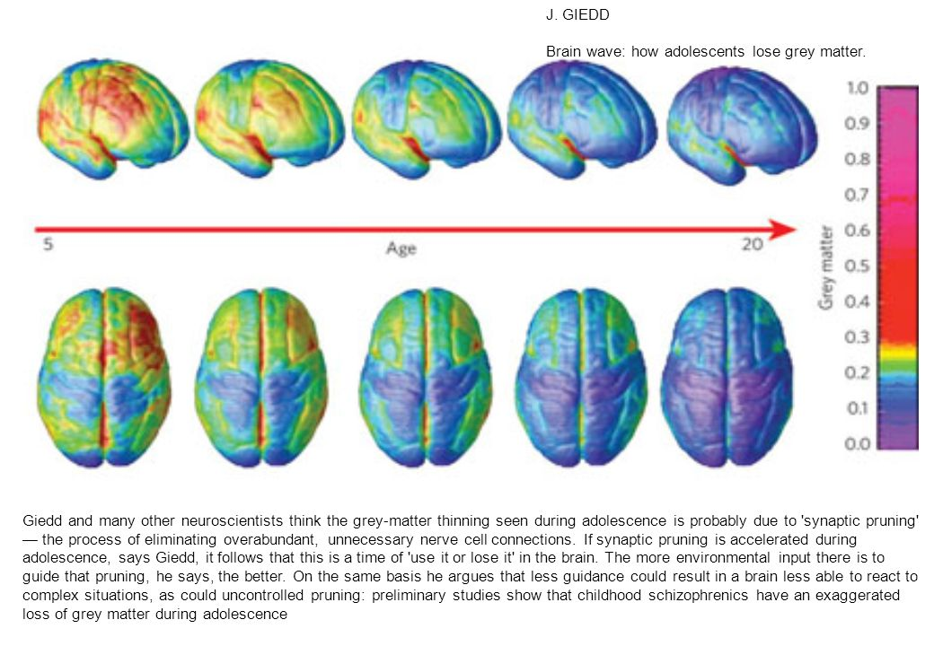 J.GIEDD Brain wave: how adolescents lose grey matter.
