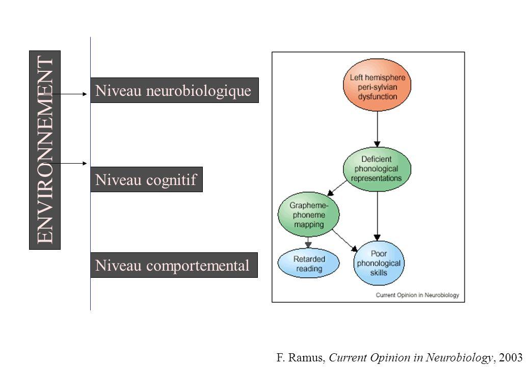 Niveau neurobiologique Niveau cognitif Niveau comportemental ENVIRONNEMENT F. Ramus, Current Opinion in Neurobiology, 2003