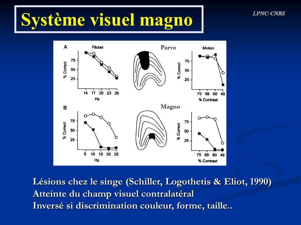 LPNC-CNRS Système visuel magno Parvo Magno Lésions chez le singe (Schiller, Logothetis & Eliot, 1990) Atteinte du champ visuel contralatéral Inversé s
