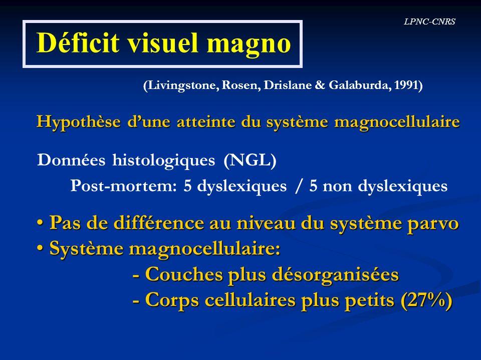 LPNC-CNRS Déficit visuel magno (Livingstone, Rosen, Drislane & Galaburda, 1991) Hypothèse dune atteinte du système magnocellulaire Données histologiqu