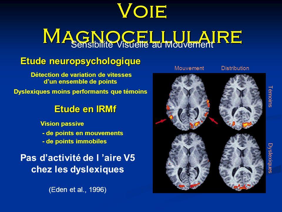 Voie Magnocellulaire Sensibilité Visuelle au Mouvement Mouvement Distribution Témoins Dyslexiques Etude neuropsychologique Détection de variation de v