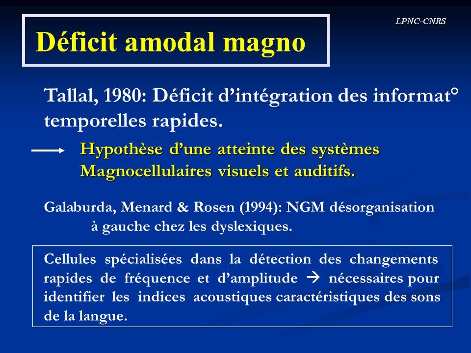 LPNC-CNRS Déficit amodal magno Tallal, 1980: Déficit dintégration des informat° temporelles rapides. Hypothèse dune atteinte des systèmes Magnocellula