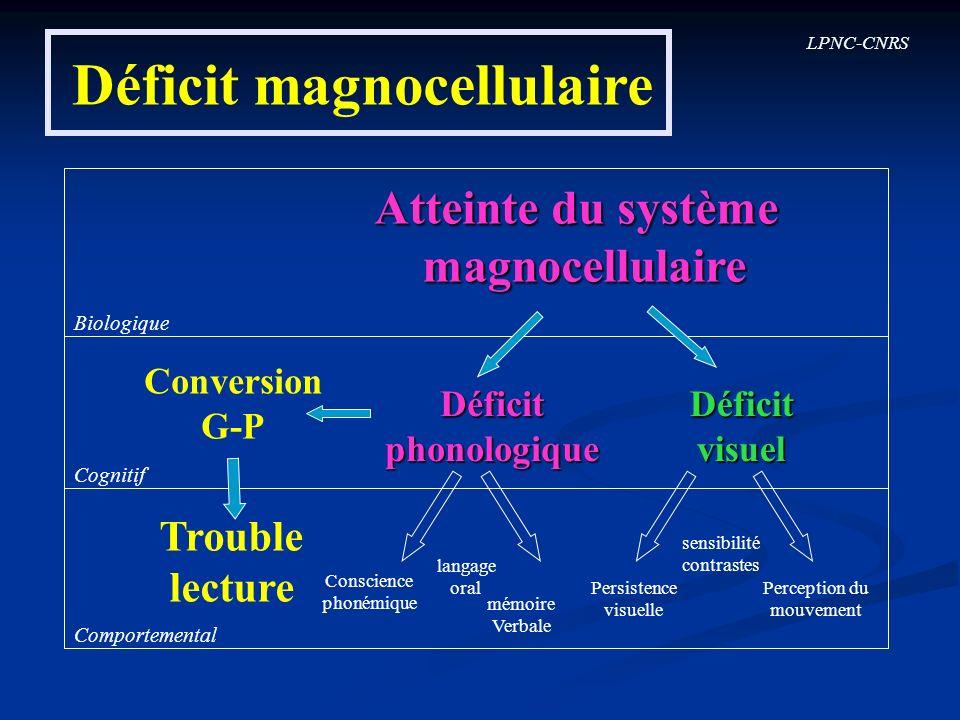 LPNC-CNRS Déficit magnocellulaire Biologique Cognitif Comportemental Conversion G-P Déficitphonologique Trouble lecture Conscience phonémique langage