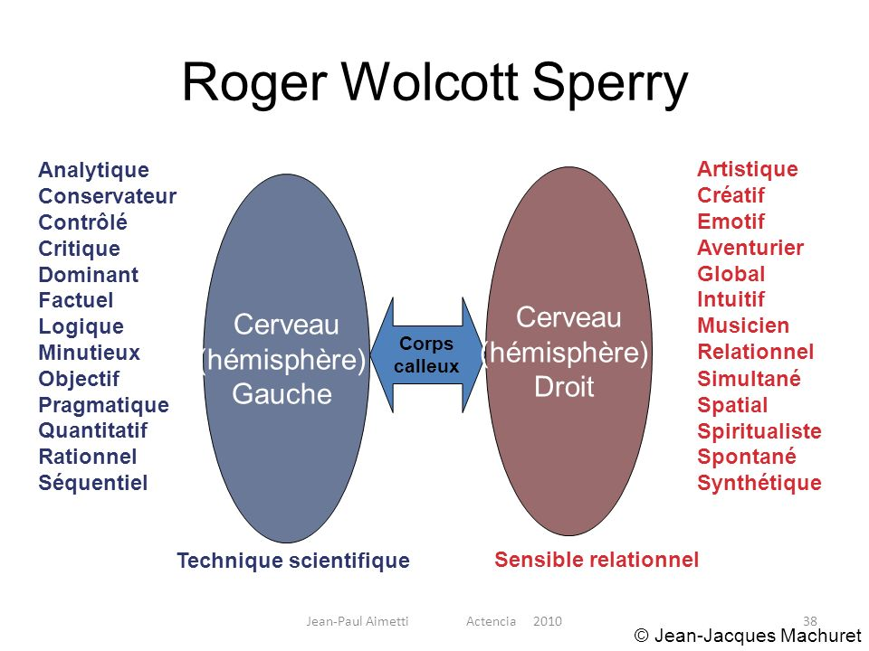 38 Roger Wolcott Sperry Cerveau (hémisphère) Gauche Corps calleux Analytique Conservateur Contrôlé Critique Dominant Factuel Logique Minutieux Objecti