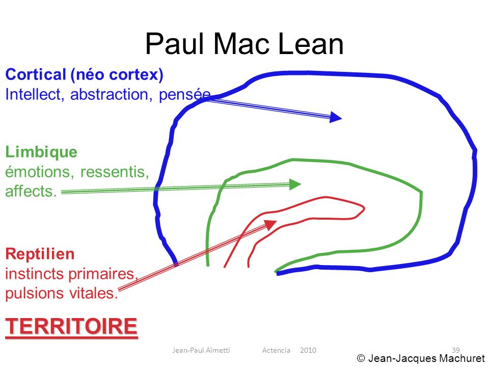 39 Paul Mac Lean Reptilien instincts primaires, pulsions vitales. TERRITOIRE Limbique émotions, ressentis, affects. Cortical (néo cortex) Intellect, a