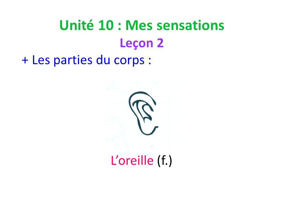 Unité 10 : Mes sensations Leçon 2 + Les parties du corps : Loreille (f.)