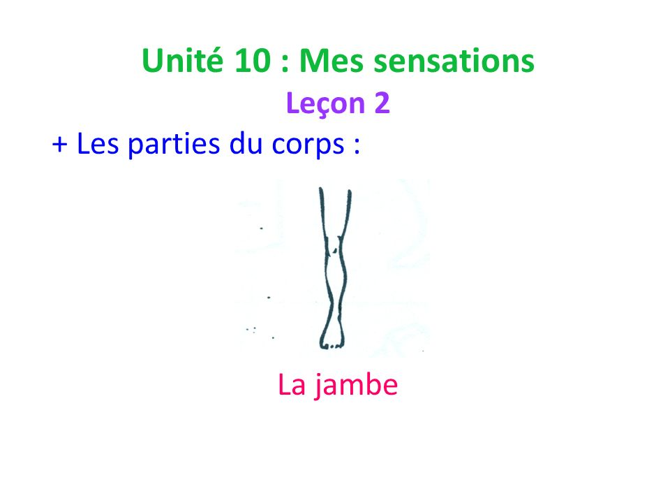 Unité 10 : Mes sensations Leçon 2 + Les parties du corps : La jambe
