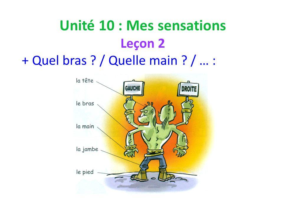 Unité 10 : Mes sensations Leçon 2 + Quel bras / Quelle main / … :