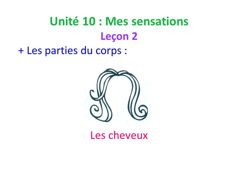 Unité 10 : Mes sensations Leçon 2 + Les parties du corps : Les cheveux