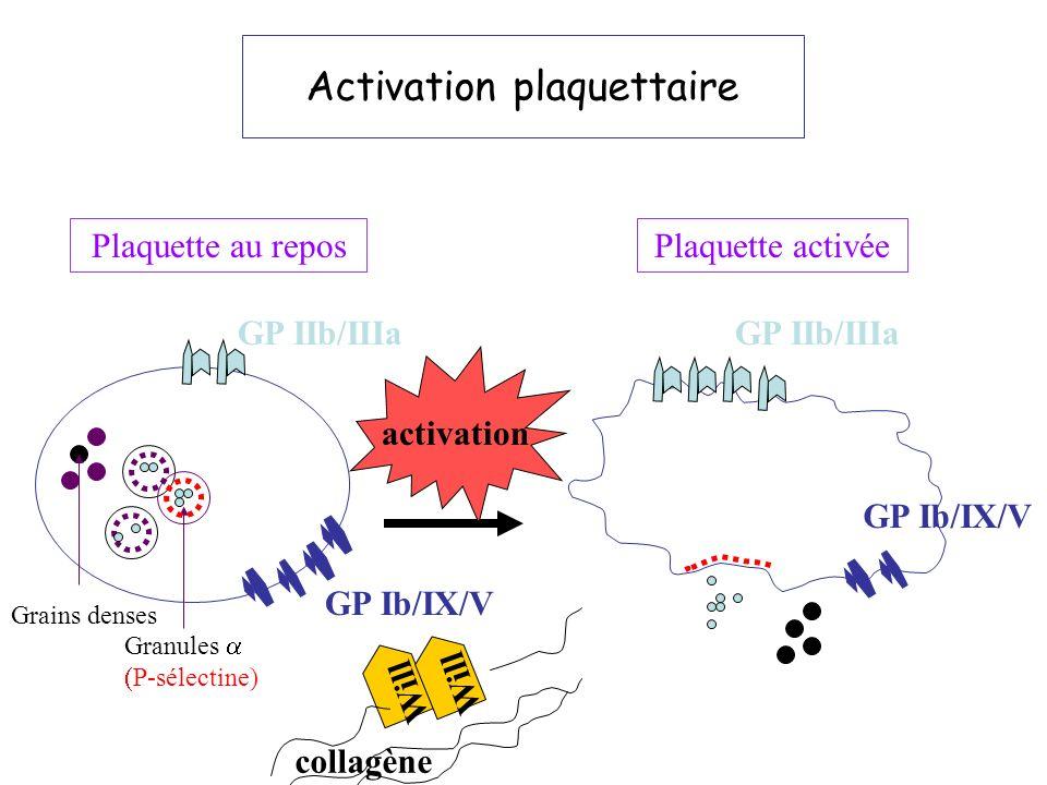 Quinacrine Activation plaq...