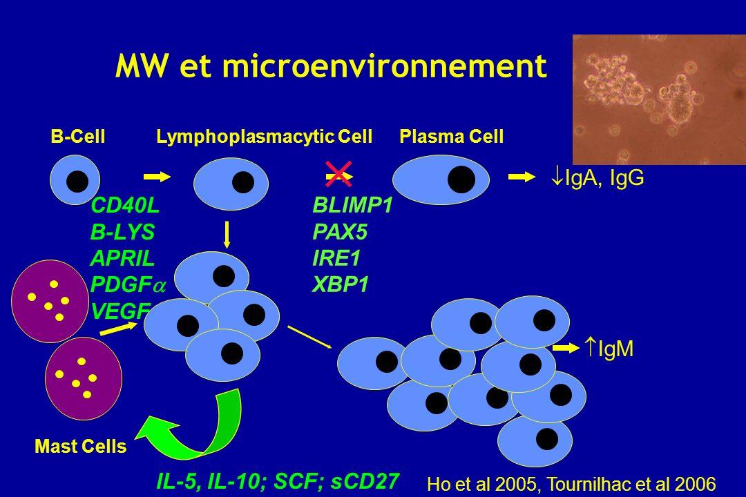 MW et microenvironnement B-CellLymphoplasmacytic CellPlasma Cell BLIMP1 PAX5 IRE1 XBP1 IgA, IgG IgM CD40L B-LYS APRIL PDGF VEGF Mast Cells IL-5, IL-10