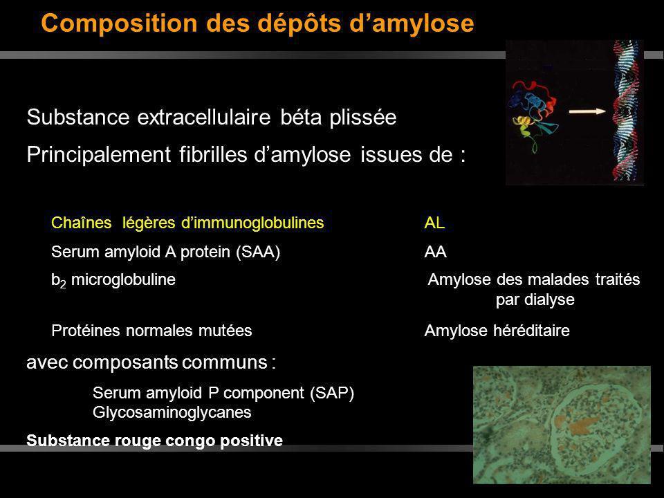 Composition des dépôts damylose Substance extracellulaire béta plissée Principalement fibrilles damylose issues de : Chaînes légères dimmunoglobulines
