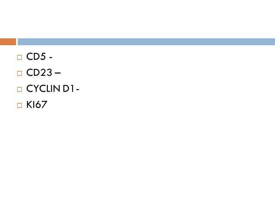CD5 - CD23 – CYCLIN D1- KI67