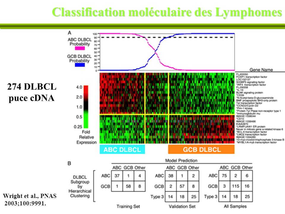 35 Classification moléculaire des Lymphomes Wright et al., PNAS 2003;100:9991. 274 DLBCL puce cDNA