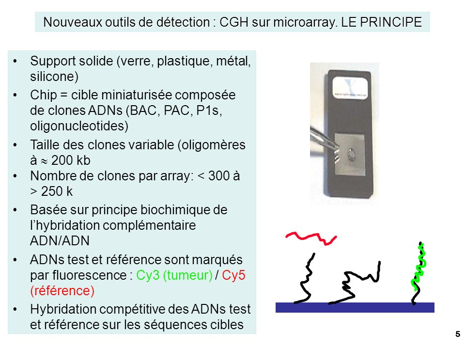 5 Support solide (verre, plastique, métal, silicone) Chip = cible miniaturisée composée de clones ADNs (BAC, PAC, P1s, oligonucleotides) Taille des clones variable (oligomères à 200 kb Nombre de clones par array: 250 k Basée sur principe biochimique de lhybridation complémentaire ADN/ADN ADNs test et référence sont marqués par fluorescence : Cy3 (tumeur) / Cy5 (référence) Hybridation compétitive des ADNs test et référence sur les séquences cibles Nouveaux outils de détection : CGH sur microarray.