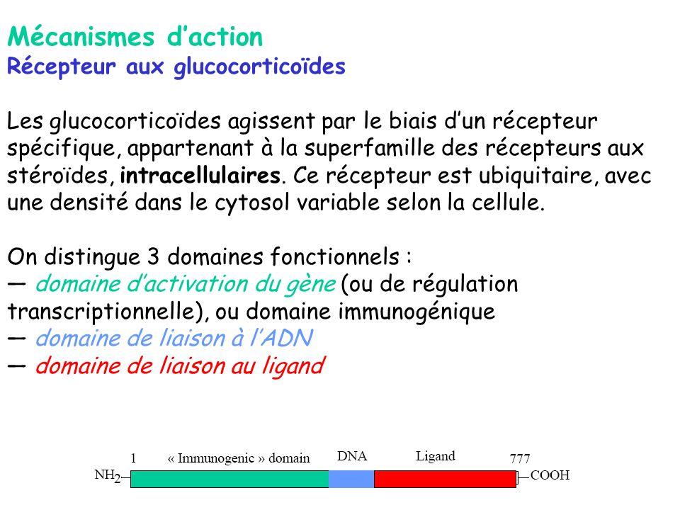 Mécanismes daction Récepteur aux glucocorticoïdes Les glucocorticoïdes agissent par le biais dun récepteur spécifique, appartenant à la superfamille d