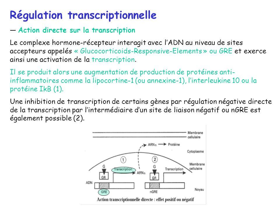 Régulation transcriptionnelle Action directe sur la transcription Le complexe hormone-récepteur interagit avec lADN au niveau de sites accepteurs appe