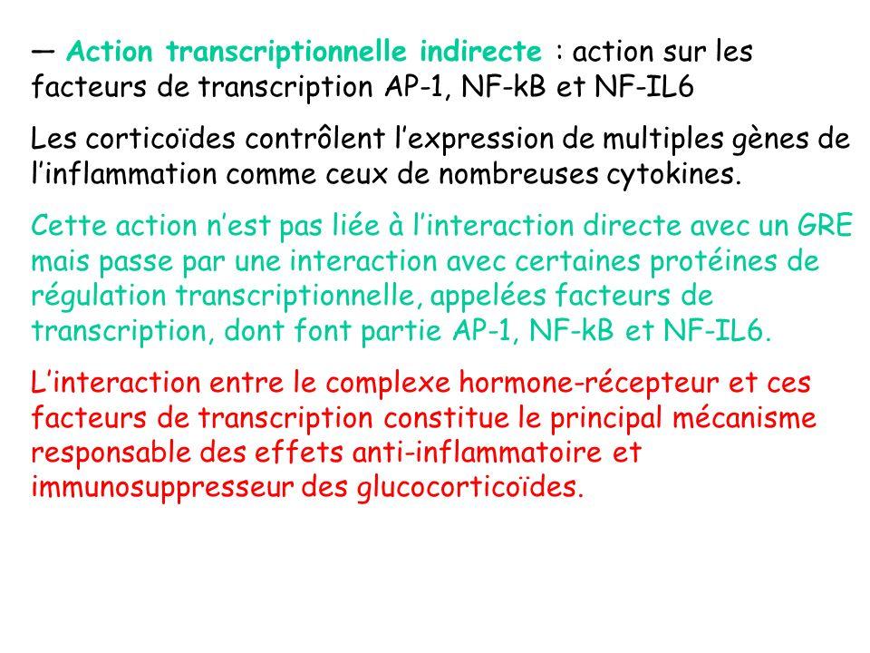 Action transcriptionnelle indirecte : action sur les facteurs de transcription AP-1, NF-kB et NF-IL6 Les corticoïdes contrôlent lexpression de multipl