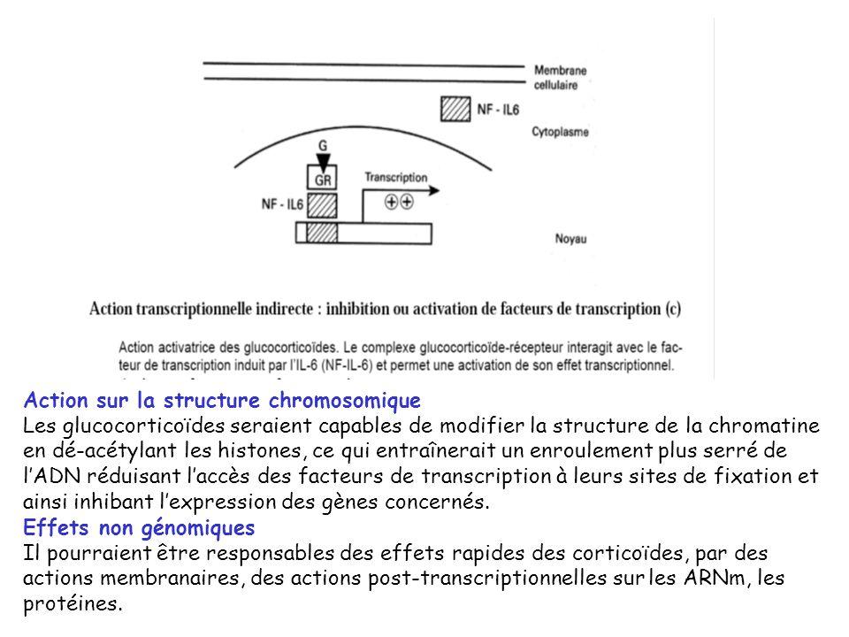 Action sur la structure chromosomique Les glucocorticoïdes seraient capables de modifier la structure de la chromatine en dé-acétylant les histones, c