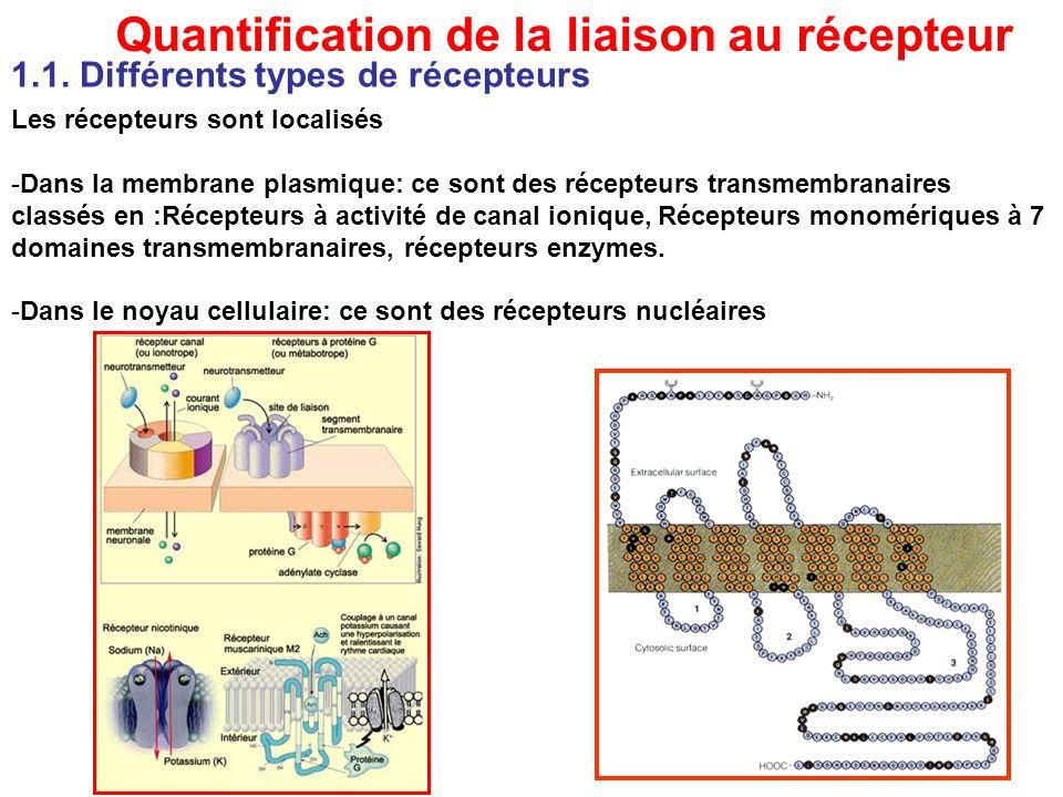 Quantification de la liaison au récepteur Les récepteurs sont localisés -Dans la membrane plasmique: ce sont des récepteurs transmembranaires classés